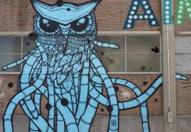 The surprising side of Leuven: street art