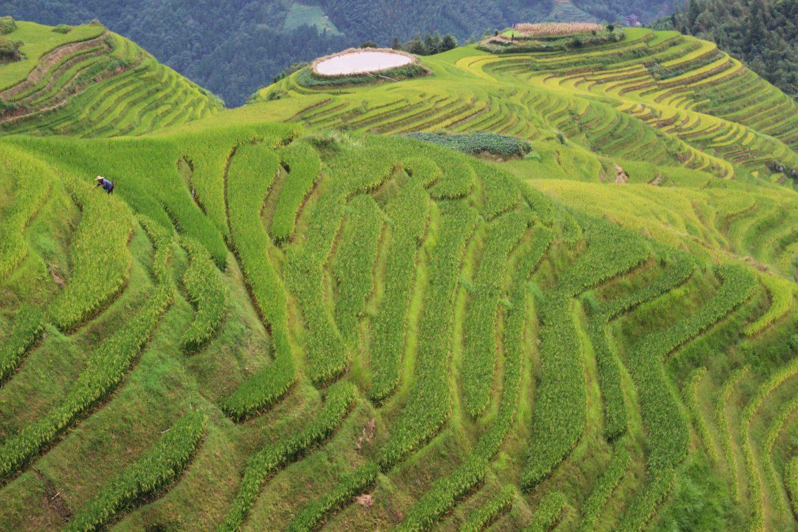 Longji rijstterassen China Pingan