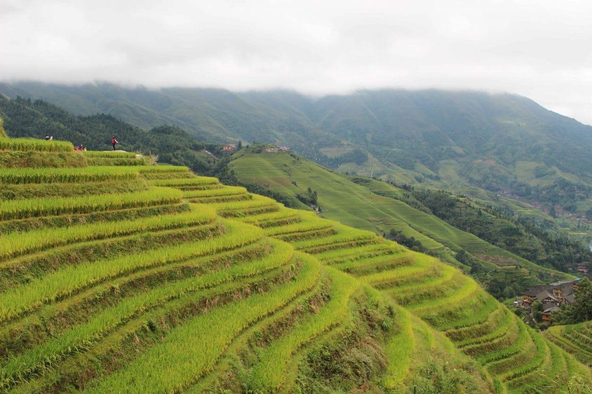 Longji rijstterrassen China Pingan