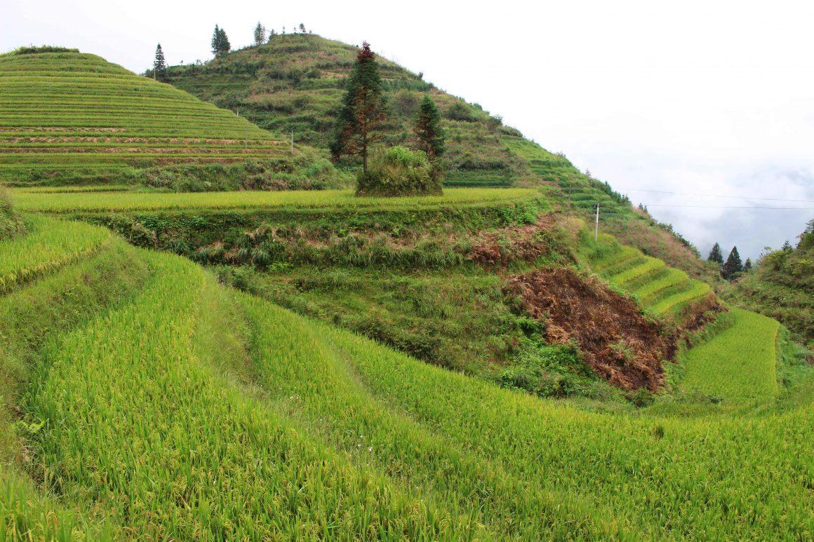 Pingan hike china rijstterrassen