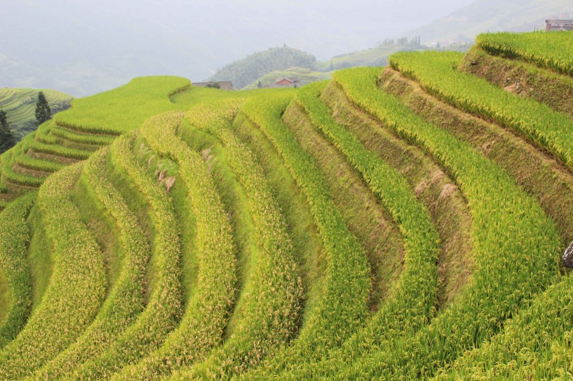 Pingan rijstvelden China