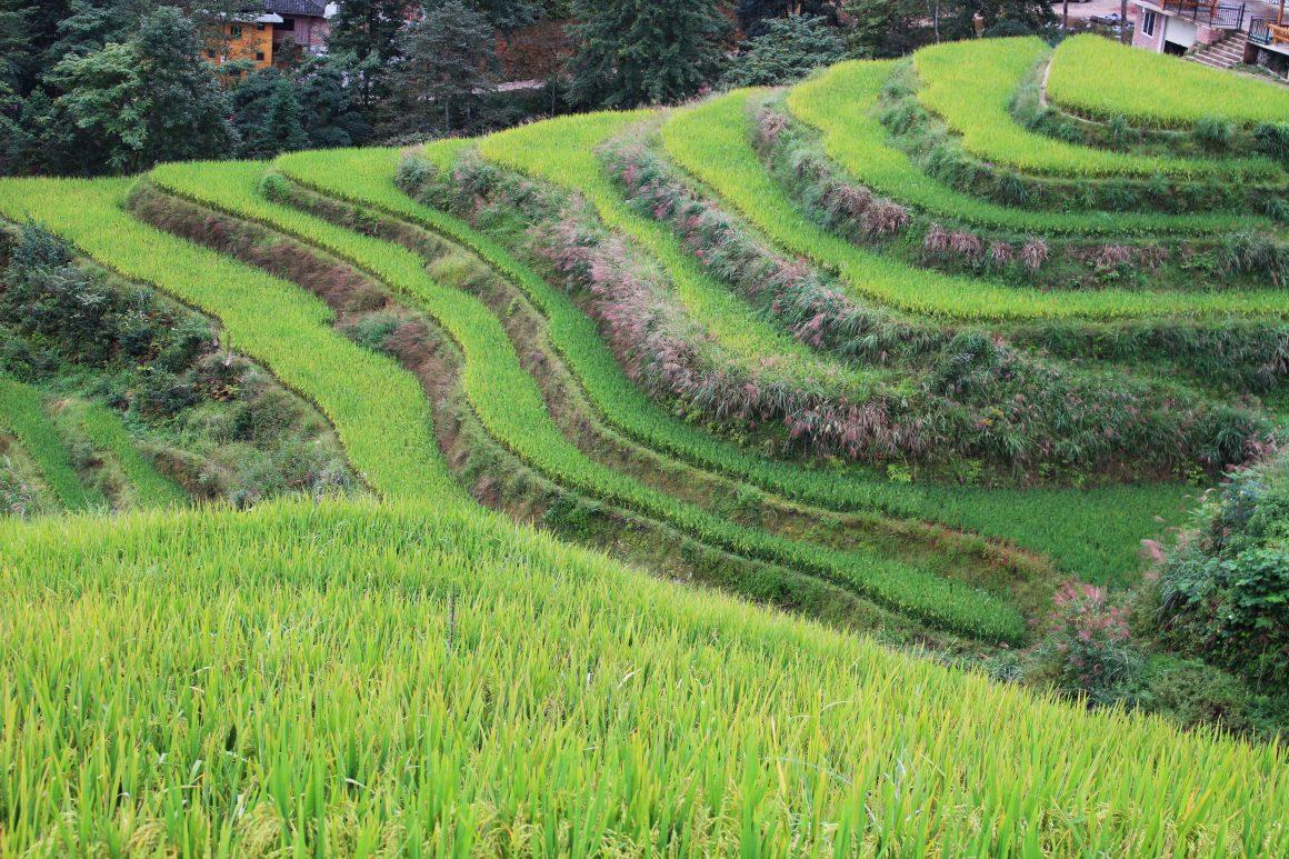 Pingan rijstvelden China Longji