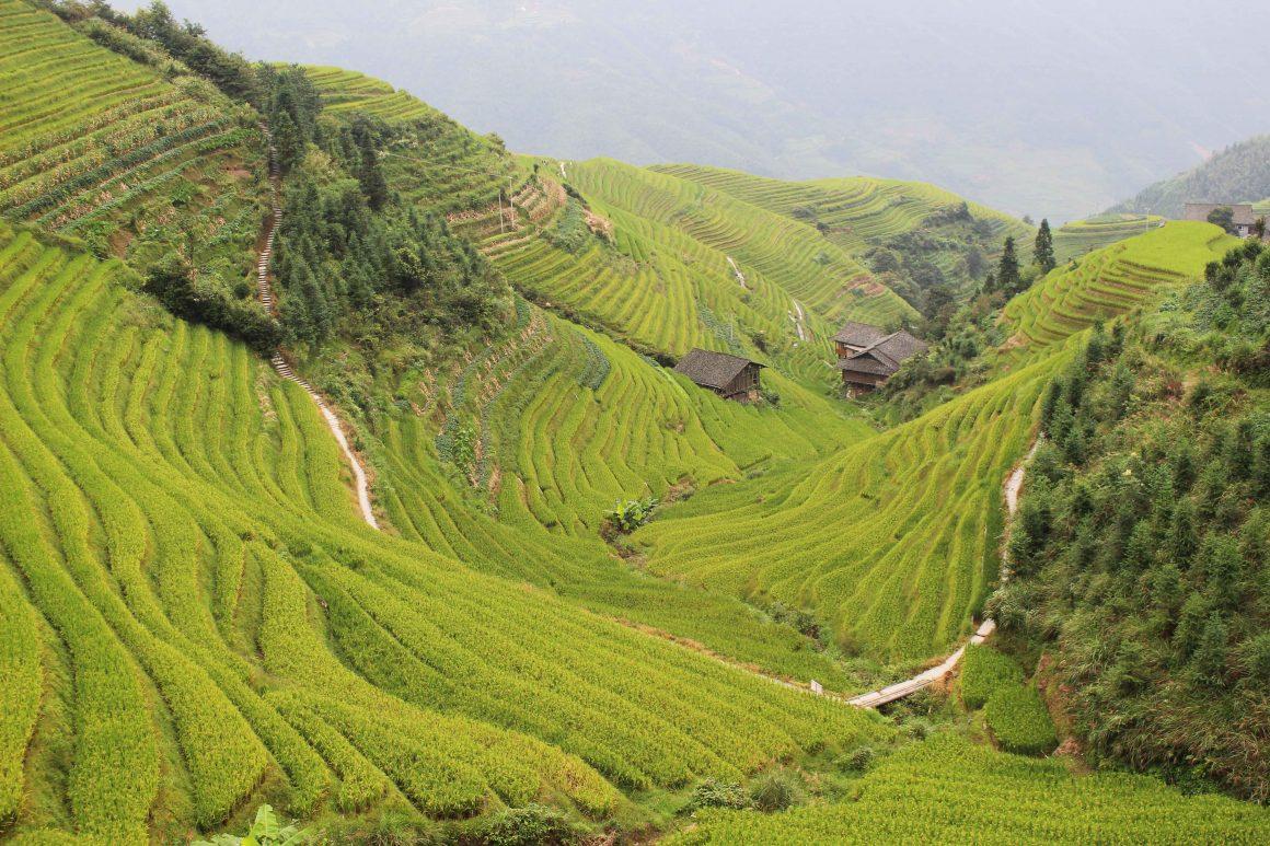 Rijstterrassen Pingan China