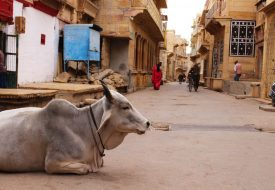 Gouden woestijnstad Jaisalmer: the good, the bad and the ugly