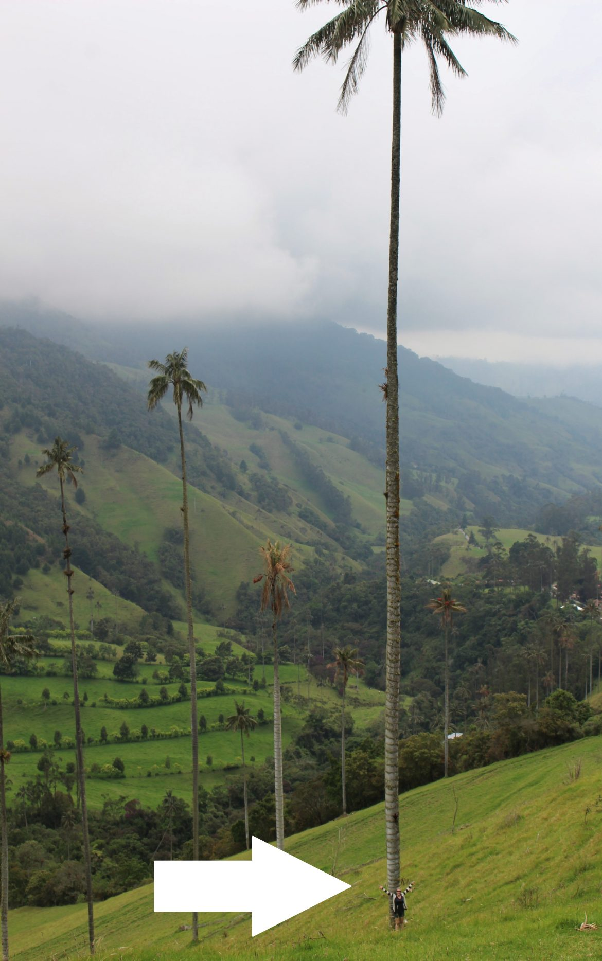 Cocora vallei Salento Colombia