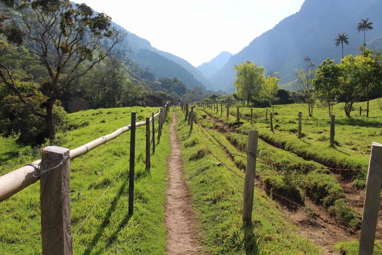 Cocora Valley Colombia