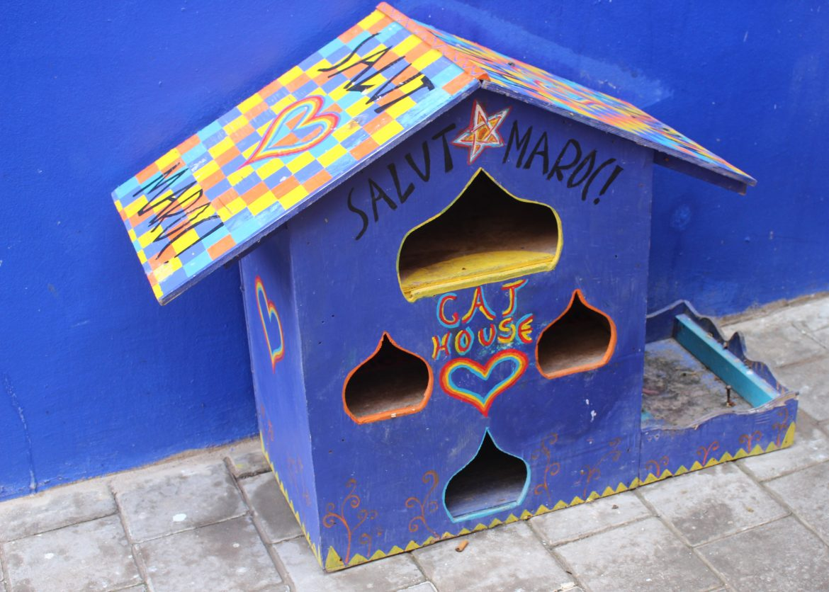 Cat house Morocco