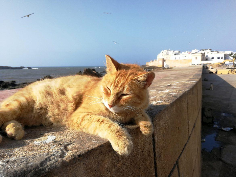 Catt Essaouira