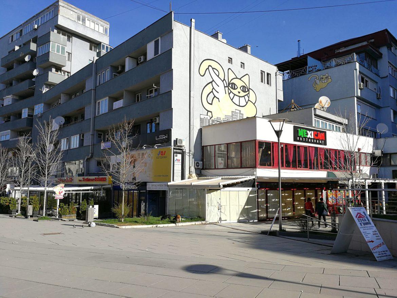 Mr. Chat in Pristina