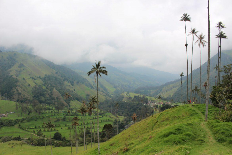 Palmbomen cocora vallei