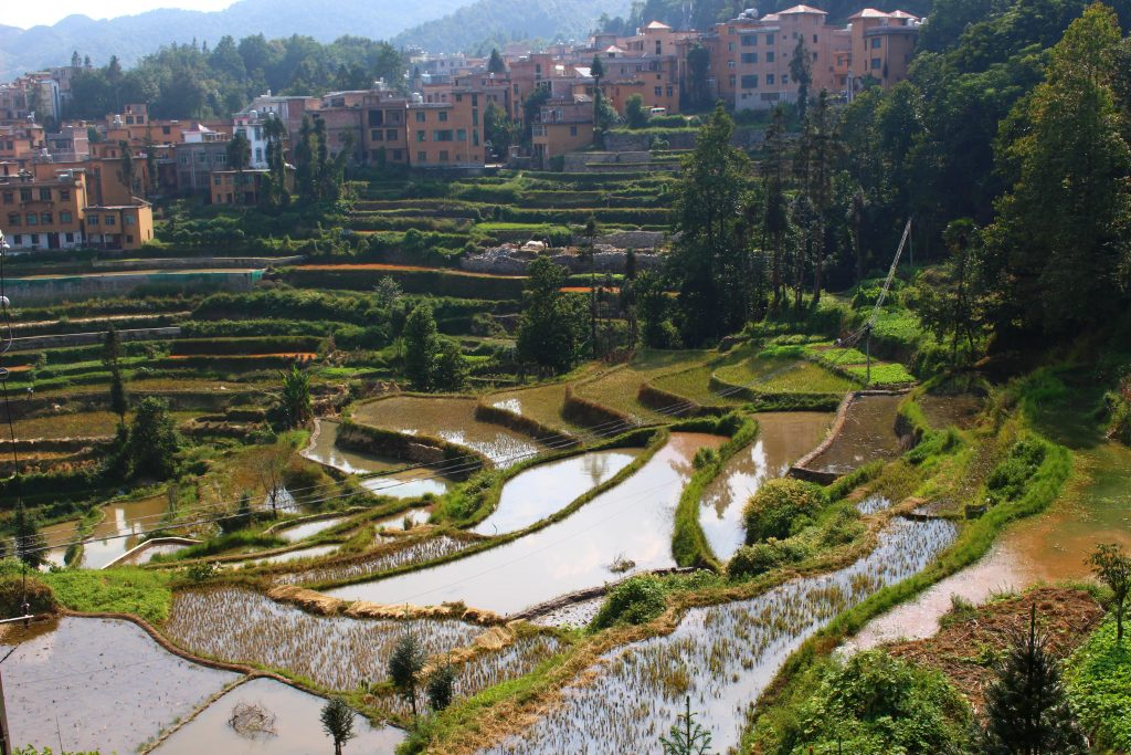 Yuangyang rice terraces China