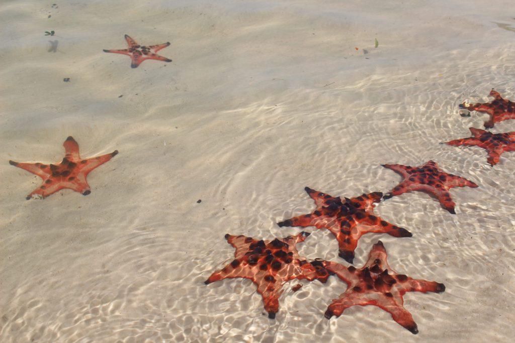 Phu Quoc starfish beach